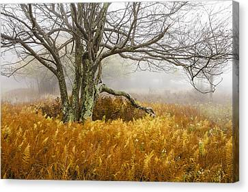 Fall Ferns And Fog Canvas Print by Bill Swindaman