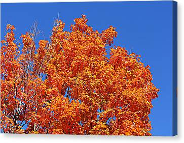 Fall Foliage Colors 19 Canvas Print by Metro DC Photography