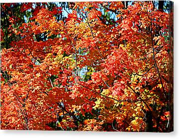 Fall Foliage Colors 22 Canvas Print by Metro DC Photography