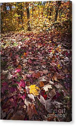 Fall Forest Floor  Canvas Print by Elena Elisseeva