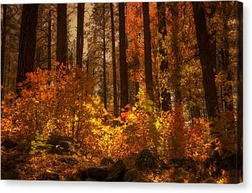 Fall Forest  Canvas Print by Saija  Lehtonen