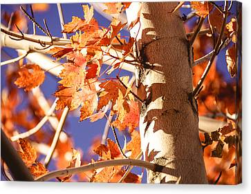 Fall Forever Canvas Print by Gloria Pasko
