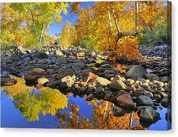 Fall In Oak Creek  Canvas Print by Dan Myers