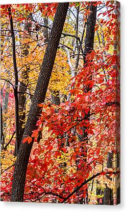 Fall In The Forest Canvas Print by John Haldane