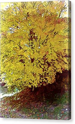 Fall In Yellow Canvas Print by Larry Bishop
