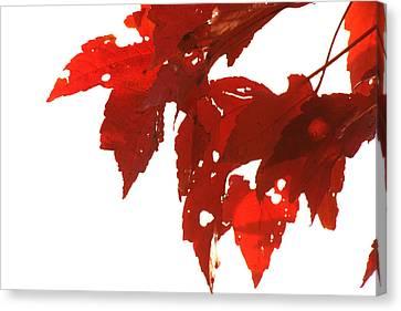 Fall Leaves Canvas Print by Susie DeZarn