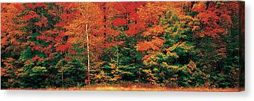 Fall Maple Trees Canvas Print by Panoramic Images