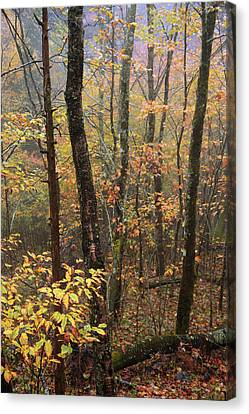 Fall Mist Canvas Print by Chad Dutson