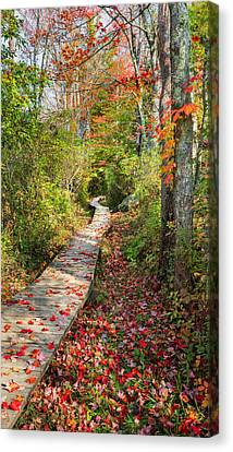 Fall Morning Canvas Print by Bill Wakeley