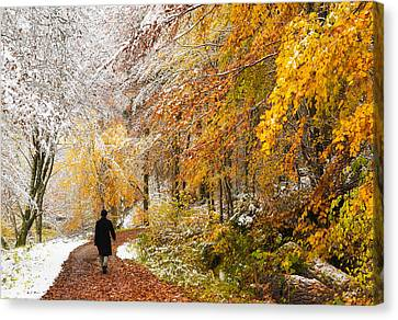 Fall Or Winter - Autumn Colors And Snow In The Forest Canvas Print by Matthias Hauser