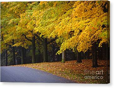 Fall Road And Trees Canvas Print by Elena Elisseeva