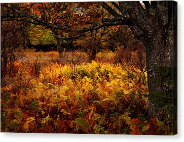 Fall Shadows - Dolly Sods West Virginia Canvas Print by Dan Carmichael