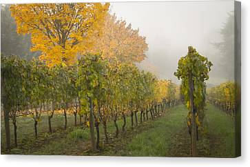 Fall Vineyard Colors Canvas Print by Jean Noren