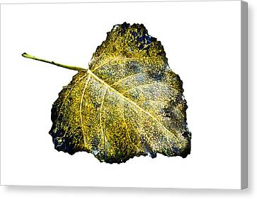 Fallen Leaf 1t Canvas Print by Greg Jackson
