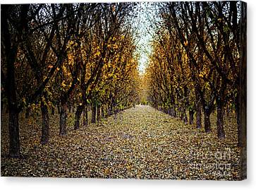 Fallen Leaves Canvas Print by Barbara Chichester