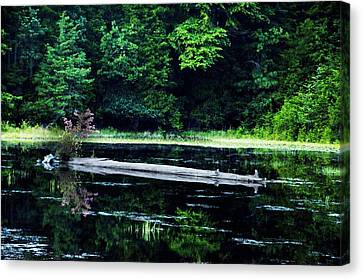 Fallen Log In A Lake Canvas Print by Bill Cannon