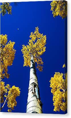 Falling Leaf Canvas Print by Chad Dutson