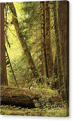 Falling Trees In The Rainforest Canvas Print by Carol Groenen