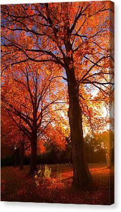 Fall's Splendor Canvas Print by Phil Koch