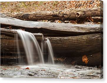 Falls Through A Tree Canvas Print by Darleen Stry