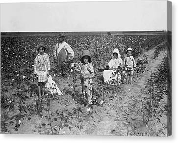 Family Picking Cotton Canvas Print by Underwood Archives