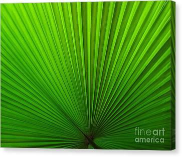 Fan Palm Canvas Print by Ranjini Kandasamy