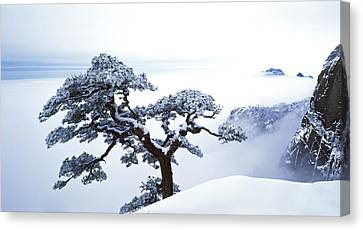 Fare-well Pine Tree Canvas Print by King Wu