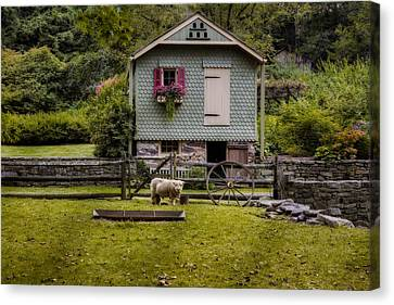 Farm House And Babydoll Sheep Canvas Print by Susan Candelario