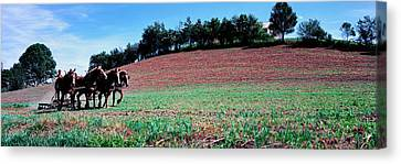 Farmer Plowing Field With Horses, Amish Canvas Print by Panoramic Images