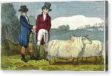 Farmers Discussing Dishley Sheep Canvas Print by Universal History Archive/uig