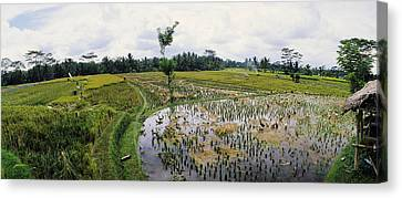 Farmers Working In A Rice Field, Bali Canvas Print by Panoramic Images