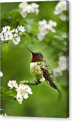 Fauna And Flora - Hummingbird With Flowers Canvas Print by Christina Rollo