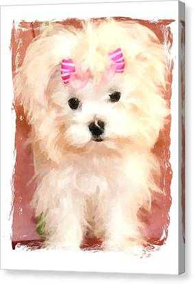 Faux Maltese Bella Canvas Print by Margaret Newcomb