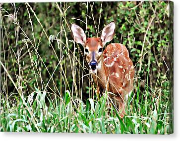 Fawn In The Grass Canvas Print by Marty Koch