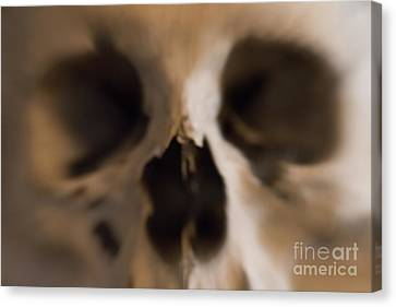 Fear And Trembling - Skull Canvas Print by Michal Boubin