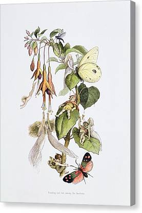 Feasting And Fun Among The Fuschias Canvas Print by Richard Doyle