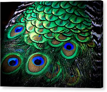 Feather Abstract Canvas Print by Karen Wiles