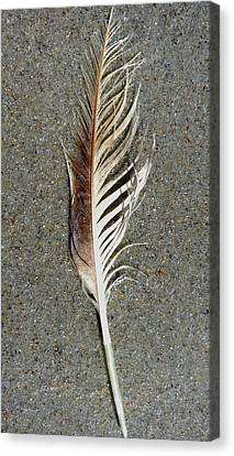 Feather On The Beach Canvas Print by Patricia Januszkiewicz