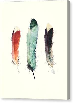 Feathers Canvas Print by Amy Hamilton