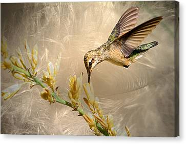 Feathers Canvas Print by Donna Kennedy