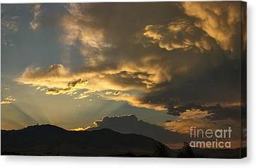 Feathers Of Sunlight Canvas Print by Charles Kozierok