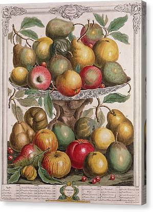 February, From Twelve Months Of Fruits, By Robert Furber C.1674-1756 Engraved By James Smith, 1732 Canvas Print by Pieter Casteels