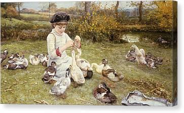 Feeding Ducks Canvas Print by Edward Killingworth Johnson