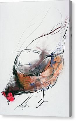 Feeding Hen, Trasierra Canvas Print by Mark Adlington