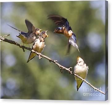 Feeding Time Canvas Print by Tracey Levine