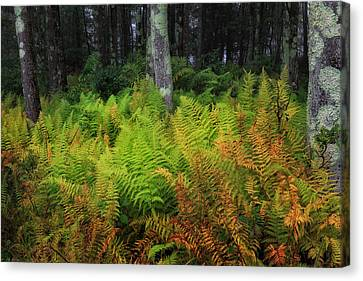 Fern Of Autumn Canvas Print by Bill Wakeley