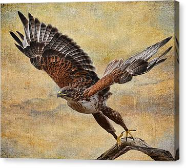 Ferruginous Hawk Canvas Print by Russell Dudzienski