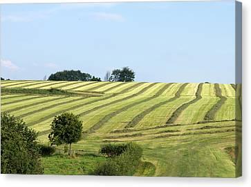 Field In Summertime Canvas Print by Jolly Van der Velden