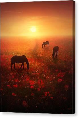 Field Of Dreams Canvas Print by Jennifer Woodward