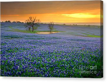Field Of Dreams Texas Sunset - Texas Bluebonnet Wildflowers Landscape Flowers  Canvas Print by Jon Holiday
